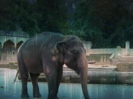 """Ob """"50 ist das neue 30"""" wohl auch für Elefanten gilt? Schließlich können auch sie alt werden."""
