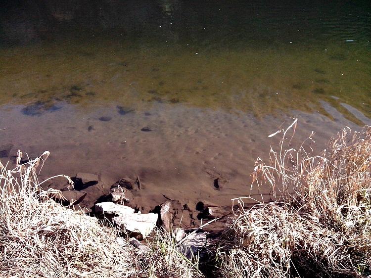 Wasserblick auf Weserschlamm