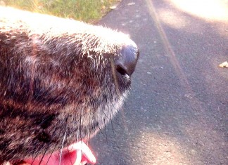 Machen wir's den Hunden nach: Lasst uns mehr riechen!